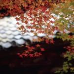 紅葉(京都西山)