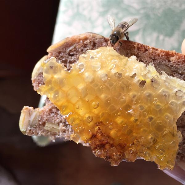 03_はちはちパンとミツバチ